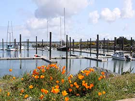 Marina with orange flowers in foreground